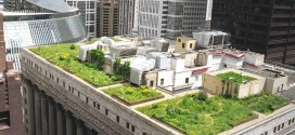 DIY Green Roof